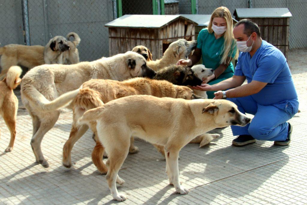 Veteriner_Barınak_Tedavisi biten köpekler (17)