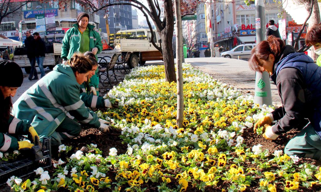 Park Bahçeler_Kışlık Çiçek Dİkimi_Sakarya Caddesi_Karanfil Sokak (25)