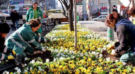 Çankaya parklarını çiçekler süsleyecek