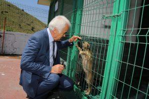2019_06_26_TBMM Hayvanların Haklarının Korunması..._Komisyon_Barınak Ziyareti (15)