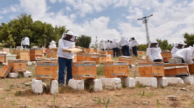 Arı ve bal üreticileri kovanları kontrol ediyor