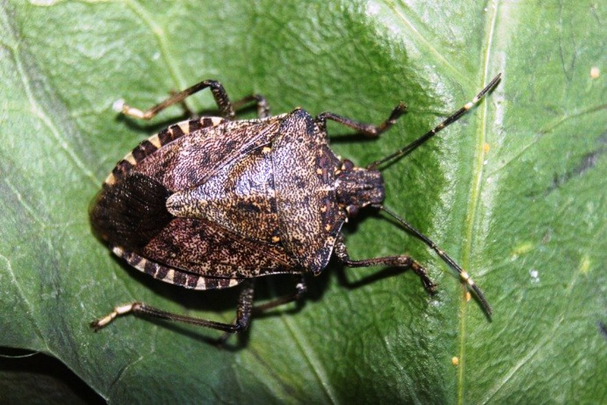 1 (57)böcek