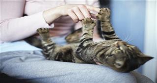 Karantina Döneminin Gizli Kahramanları: Kediler