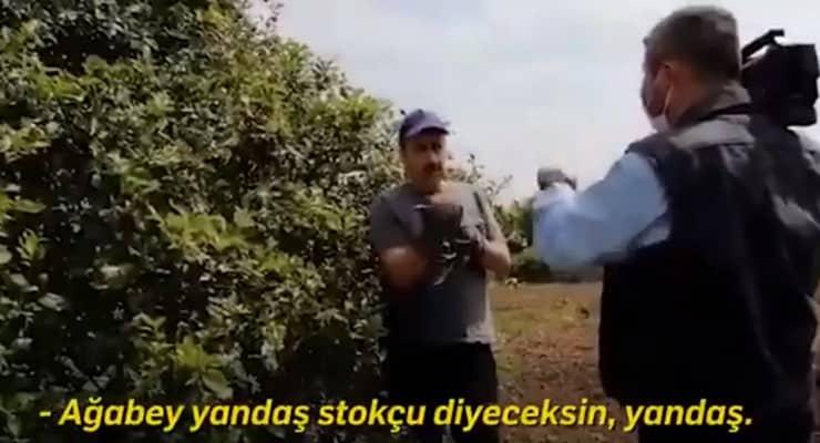 limon-kurgu