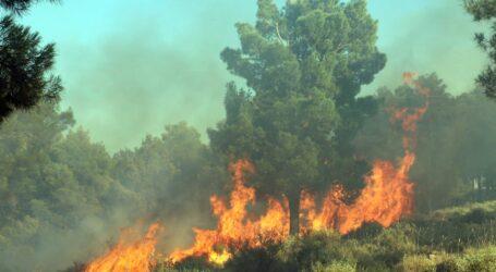 """""""Ormanlarımızda yıkıcı etkileri olacak yönetmelik acilen değişmelidir"""""""