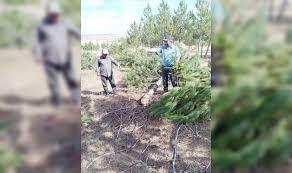 YOZGAT-BOĞAZLIYAN Oğulcuk Koruluğunda Ağaç Katliamı: .