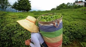 """""""Çay üreticileri geleceğe dair derin kaygılar yaşıyor"""""""